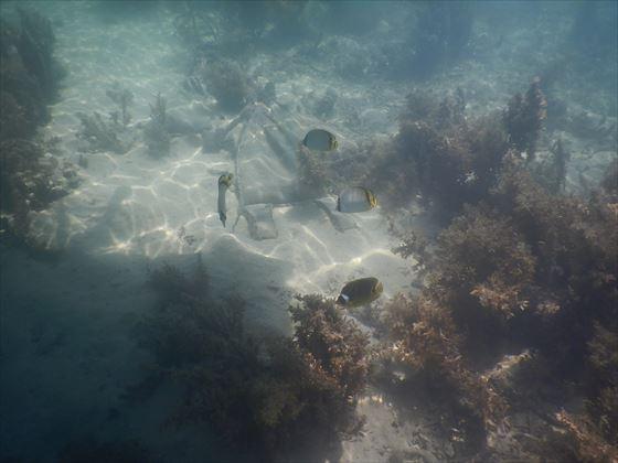 海の中の様子、黄色と黒の魚が数匹