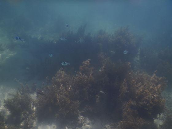 海の中の様子、小さい青と黒のしましまの魚の群れ