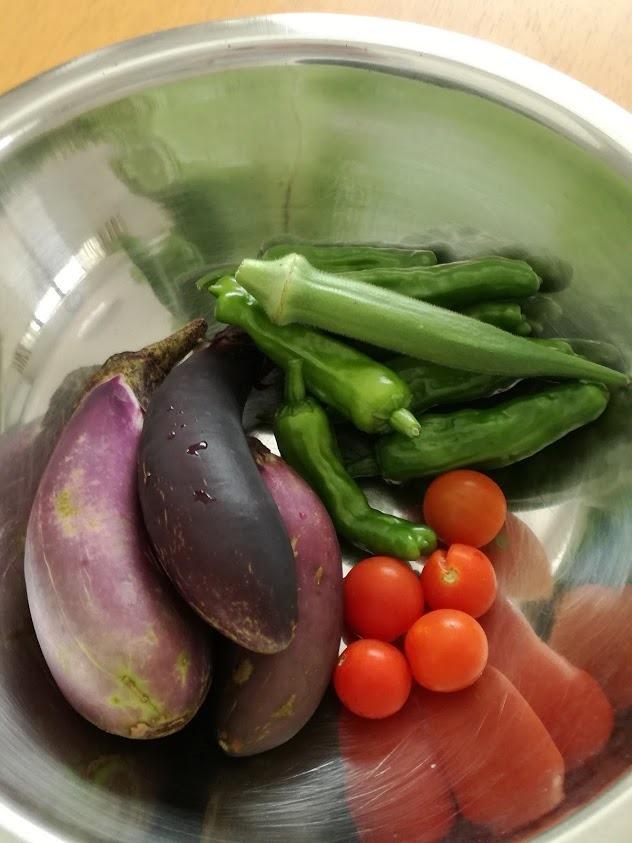 家庭菜園ナス、ミニトマト、オクラ