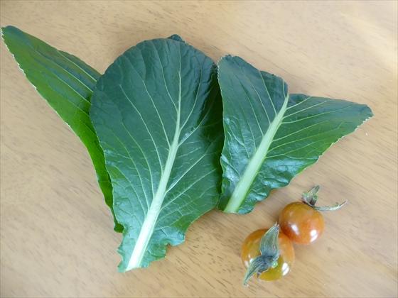 収穫したリボベジ小松菜