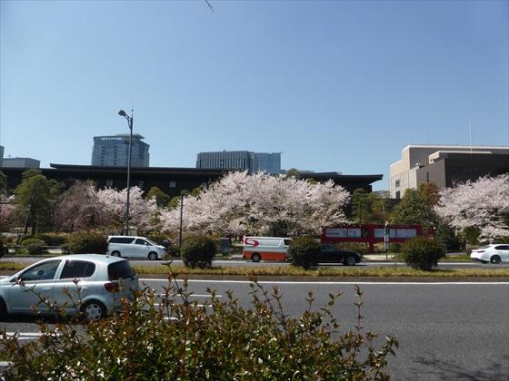 国立劇場前の桜