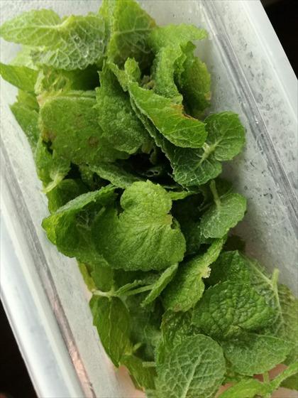 凍らせて保存したミントの葉