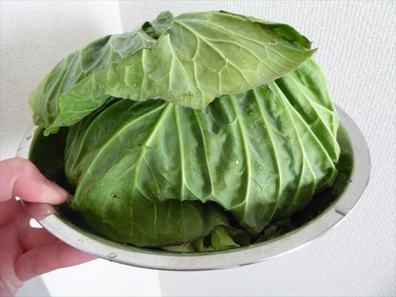 固い外側の葉で包んだ半切りキャベツ