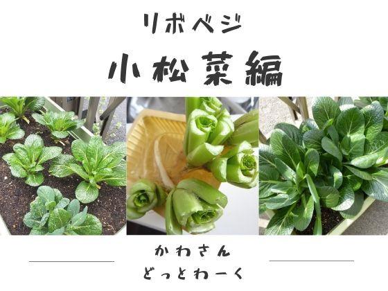 リボベジ小松菜編アイキャッチ