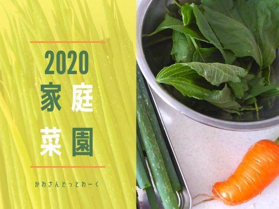 2020年家庭菜園アイキャッチ