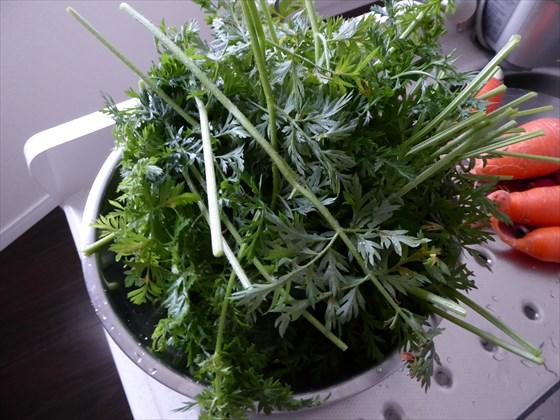 ボウルに盛った収穫した人参の葉