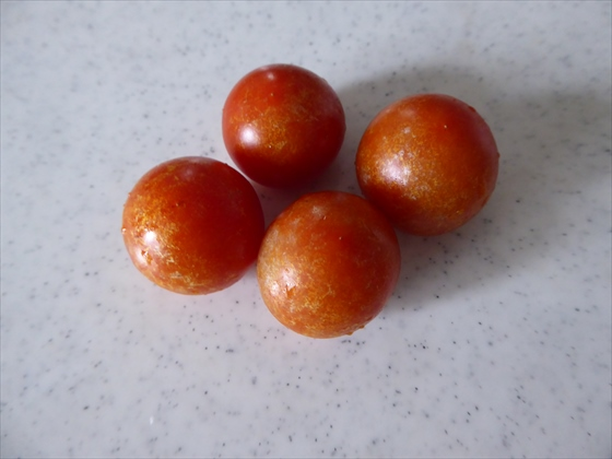 収穫した4個のミニトマト