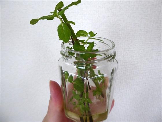 小瓶に挿したミントの枝