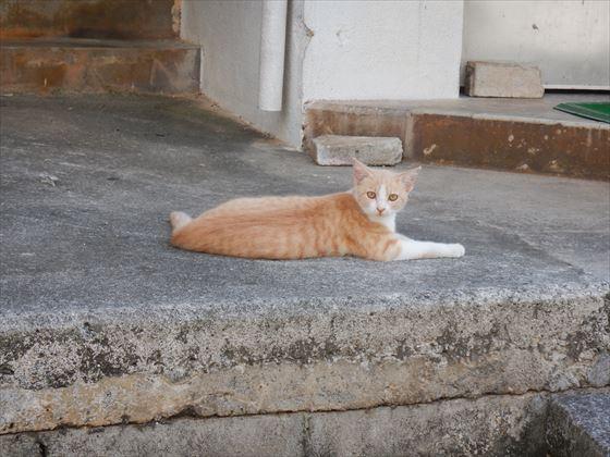 仲泊・大田の街中の様子、野良猫