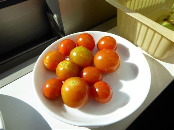窓辺に置いているミニトマト