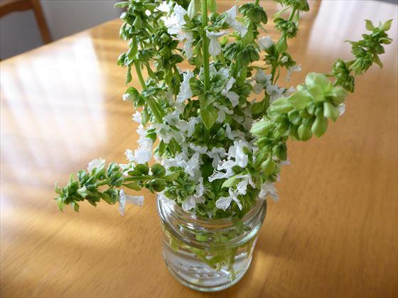 空き瓶に挿したバジルの花