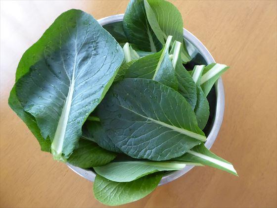 ボウルに入った小松菜の葉
