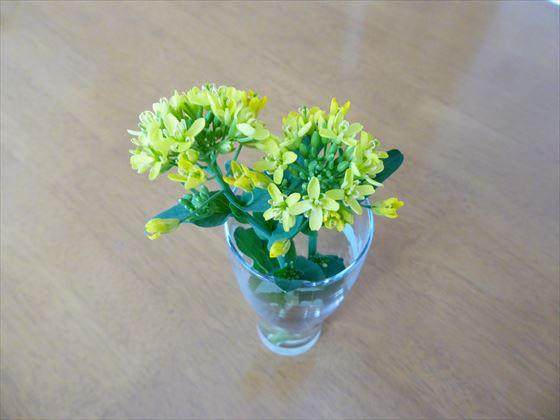 満開になった小松菜の花